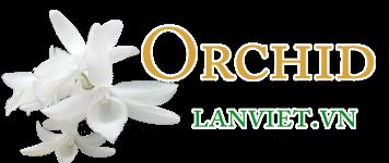 Logo - Lan việt