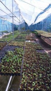 Tiêu chuẩn cho một vườn lan cấy mô phát triển tốt nhất