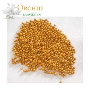 Phân tan chậm hạt vàng Oscomote