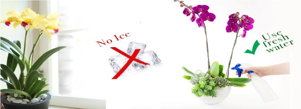 Tổng hợp kinh nghiệm chơi lan và phòng trừ bệnh cho lan