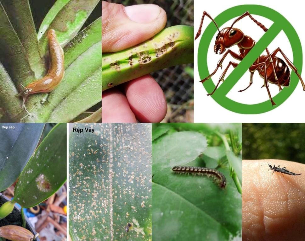 Diệt kiến ốc sên rệp đơn giản chỉ với nước súc miệng Listerine