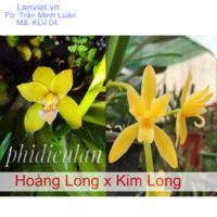 Lan kiếm Hoàng Long lai Kim Long