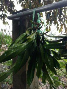 Chăm sóc lan mùa mưa
