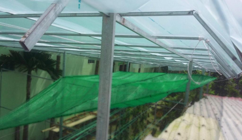 Phòng bệnh cho lan mùa mưa