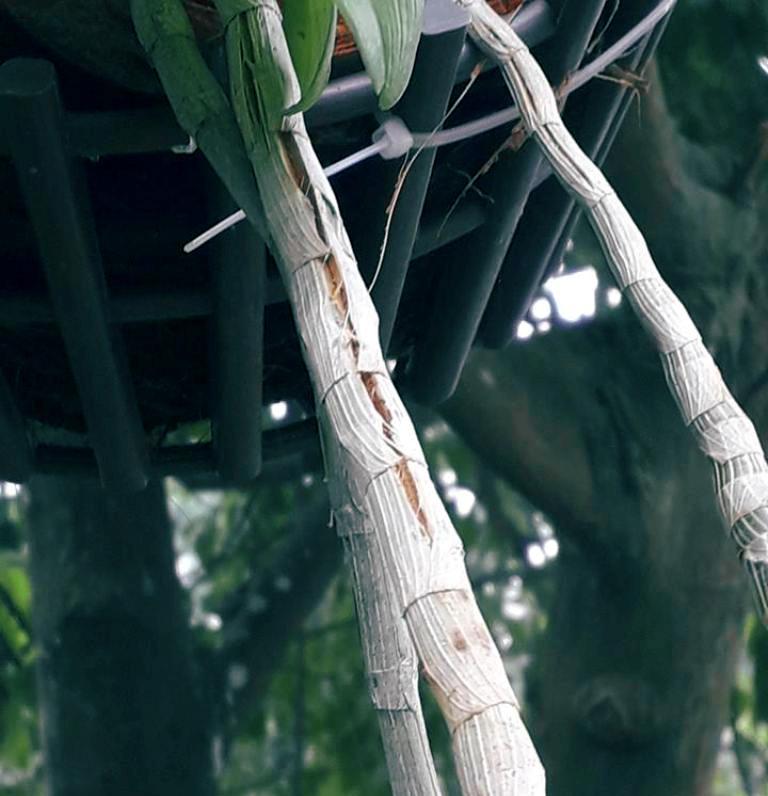 Biểu hiện phong lan thiếu vi lượng